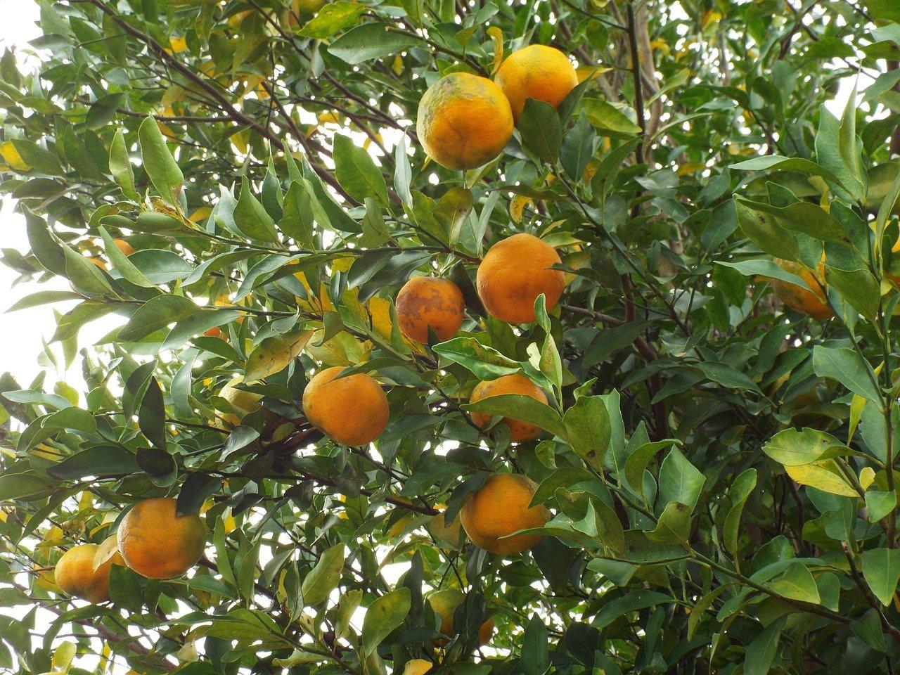 fruit-355096_1280